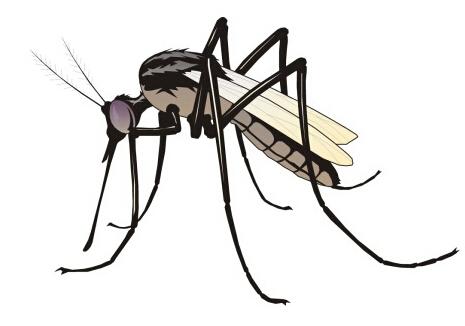 蚊子防治方法