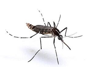 蚊子防治厂家