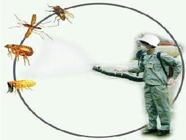 喷雾灭蟑螂