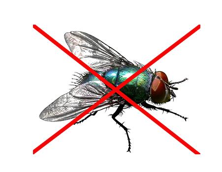 灭苍蝇方法